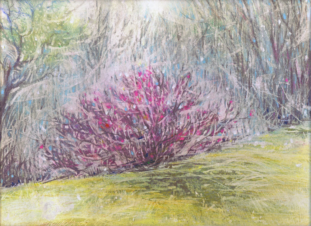 Redbuds 02, misty morning in Coppell, TX, 14H x 11W inches oil pastels, graphite, watercolor pencils on paper