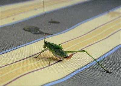 Cool Cricket, Lewisville, Texas