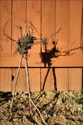 Song and Dance - Basil roots and stems garden sculpture