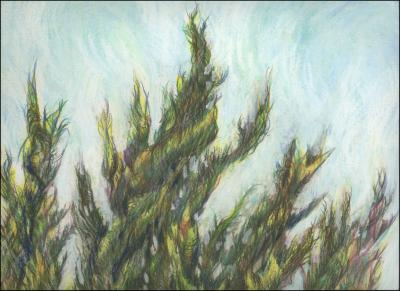 Cypress, Kitty Hawk, NC - 24 x 18 inches Pencil, Oil Pastel, Watercolor pencils