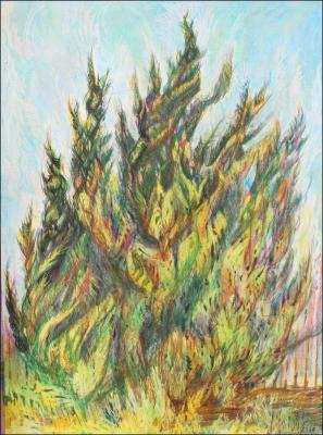 Windswept Cypress, Outer Banks, NC - work in progress