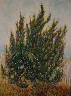 Cypress, KittyHawk, NC - 24 x 18 Oil Pastels