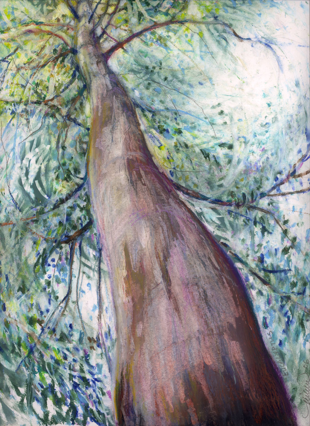 Eucalyptus Tree, Queensland, Australia 14 x 11 inches Oil Pastels on paper, framed size 26 x 22 inches