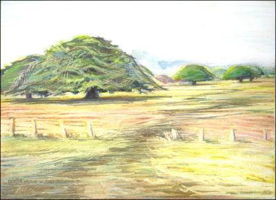 Guanacaste Trees, Costa Rica - 11 x 14 oil pastels, graphite on paper