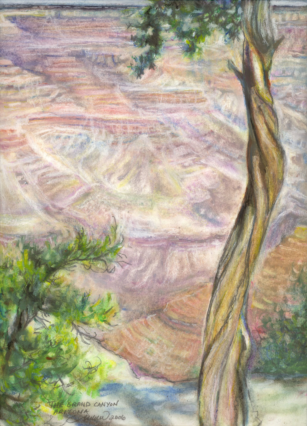 Silent Witness - Grand Canyon Juniper, North entrance, Arizona USA -14 x 11 inches oil pastels on paper