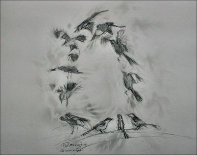 Mockingbird mating flight ritual - 10 x 10 inches study in graphite, eraser, paper