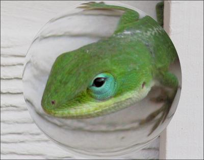 Green Anole - digitized sphere, photography