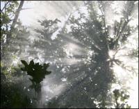 Sun Shower 03