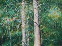 Eastern White Pine, 18 x 24 inches Oil Pastels on paper, framed size 21 x 27 inches