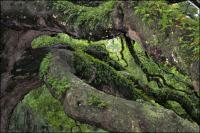 Branches of the Angel Oak, arbourists have propped and supported the weight in areas with stakes and cables.