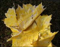 Large Leaf Maple - top detail, first color base coat - total size 36 x 12 x 3 inches, muslin sculpted leaves, work in progress