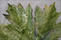 Encaustics test on muslin leaf shape painted with glue for stiffness, oil pastels