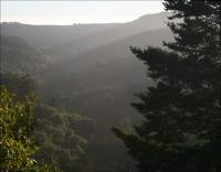 On Cloud 9, view from the road to the Giant Redwoods in the John Muir National Forest, CA