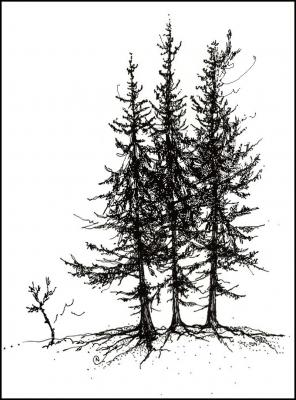 Alberta Spruce, pen and ink, digital pen