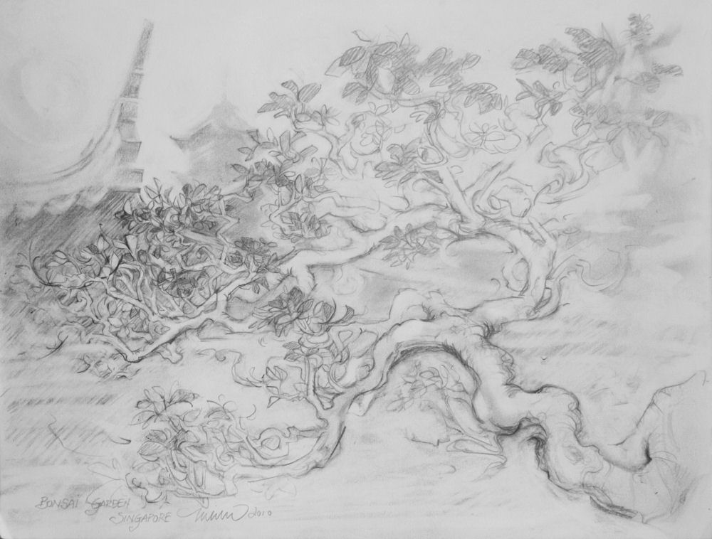 Bonsai Garden, Chinese and Japanese Gardens, Singapore  9H x 12W inches graphite on paper