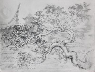 Bonsai Garden, 9 x 12 inches graphite on paper