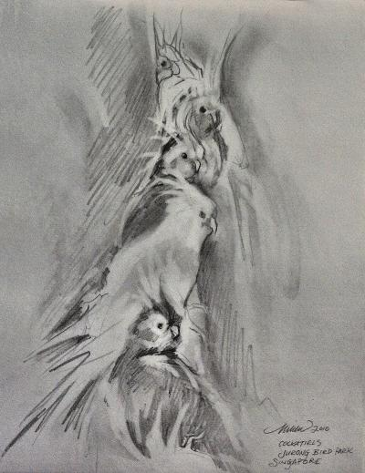 Cockatiels at the Jurong Bird Park, Singapore 14 x 11 inches graphite on paper