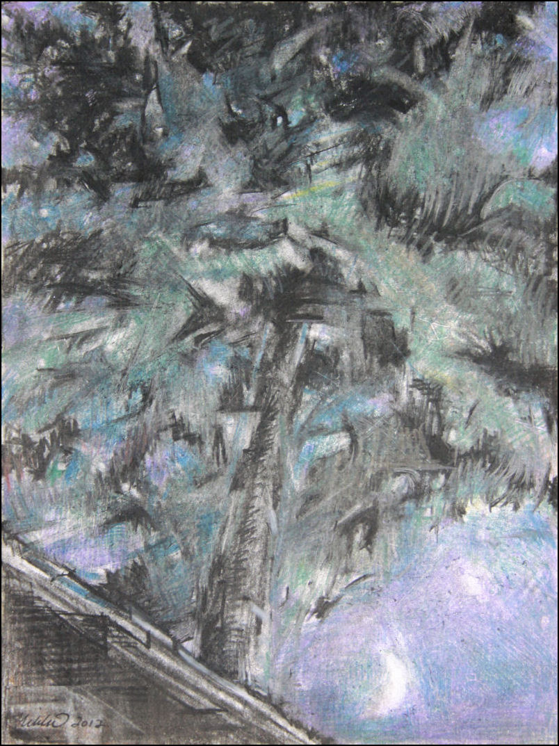 Stars in the Sweetgum, 9 x 12 inches charcoal and colored pencils on paper