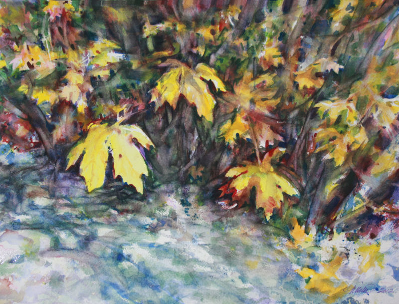 Big Leaf Maple 12H x 16W inches watercolors on 140 lb 100% cotton paper