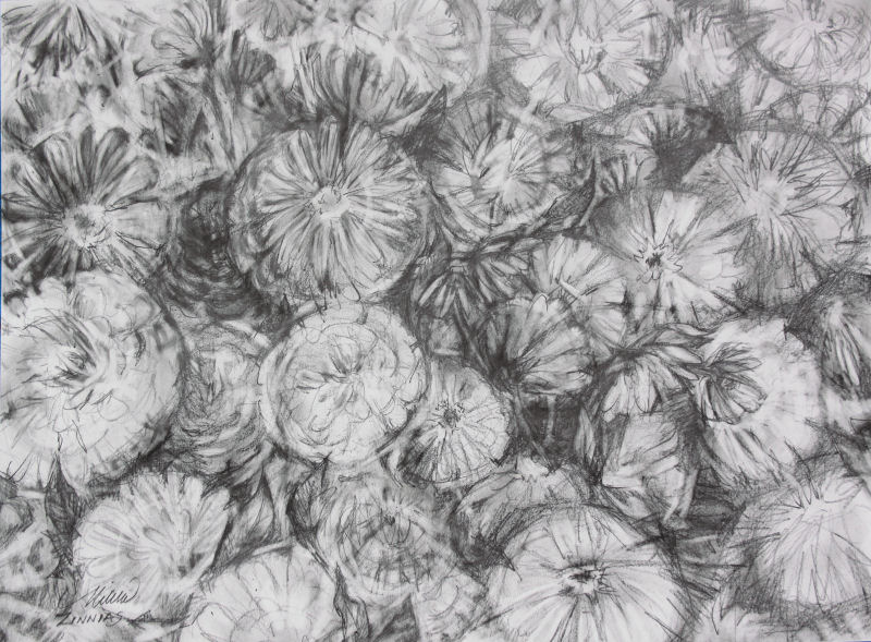 Zinnias, 24 x 36 inches graphite on paper, finished