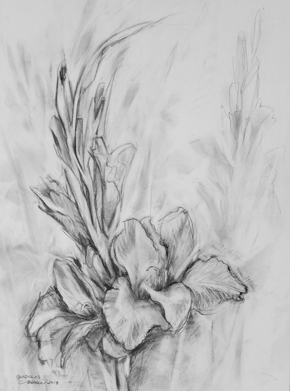 Gladiolas, 24H x 18W inches graphite on paper