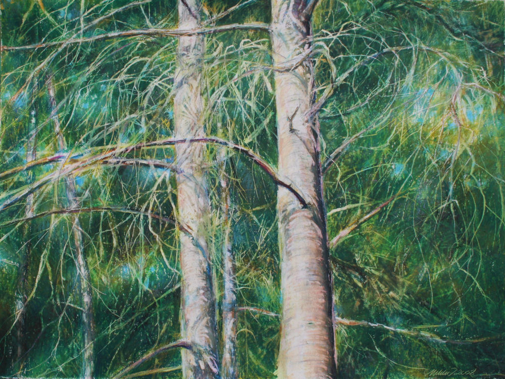 Eastern White Pine, 18H x 24W inches oil pastels on paper