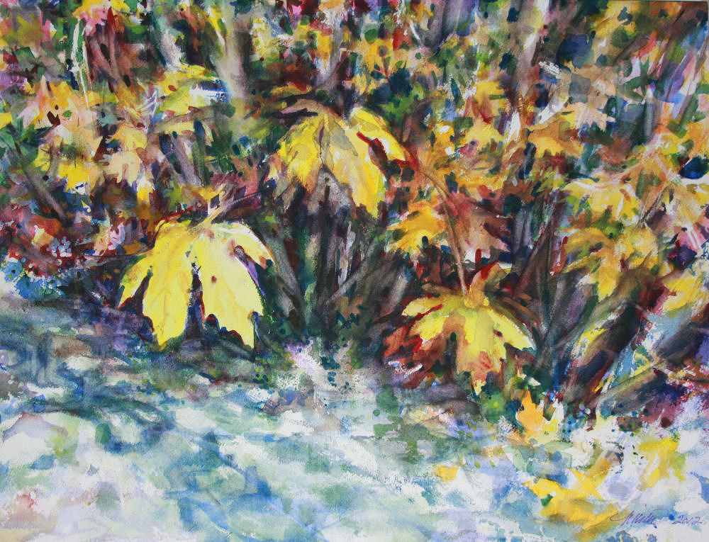 Bigleaf Maple,12H x 16W inches  watercolors on 140 lb cold pressed premium with white mat