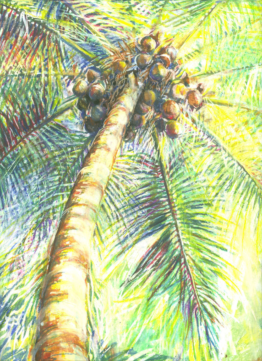 Coconut Palm, Costa Rica, 14H x 11W inches oil pastels, white double mat, brass title plate, 22H x 26W inches wide white frame with white crackle finish