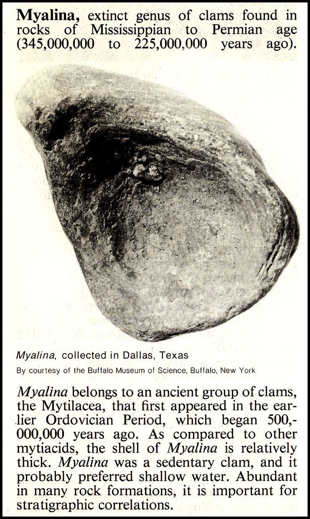 Encyclopedia Brittanica entry about the extinct Myalina fossil