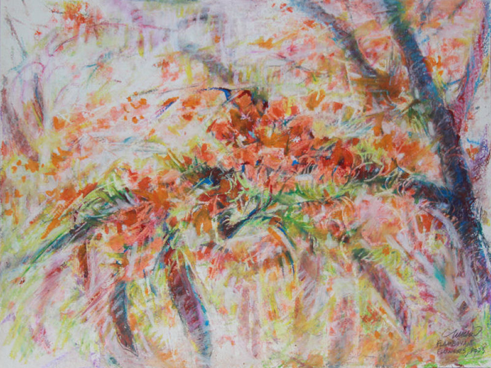 Flamboyant Tree in Bloom, 9H x 12W inches oil pastels on paper, white mat
