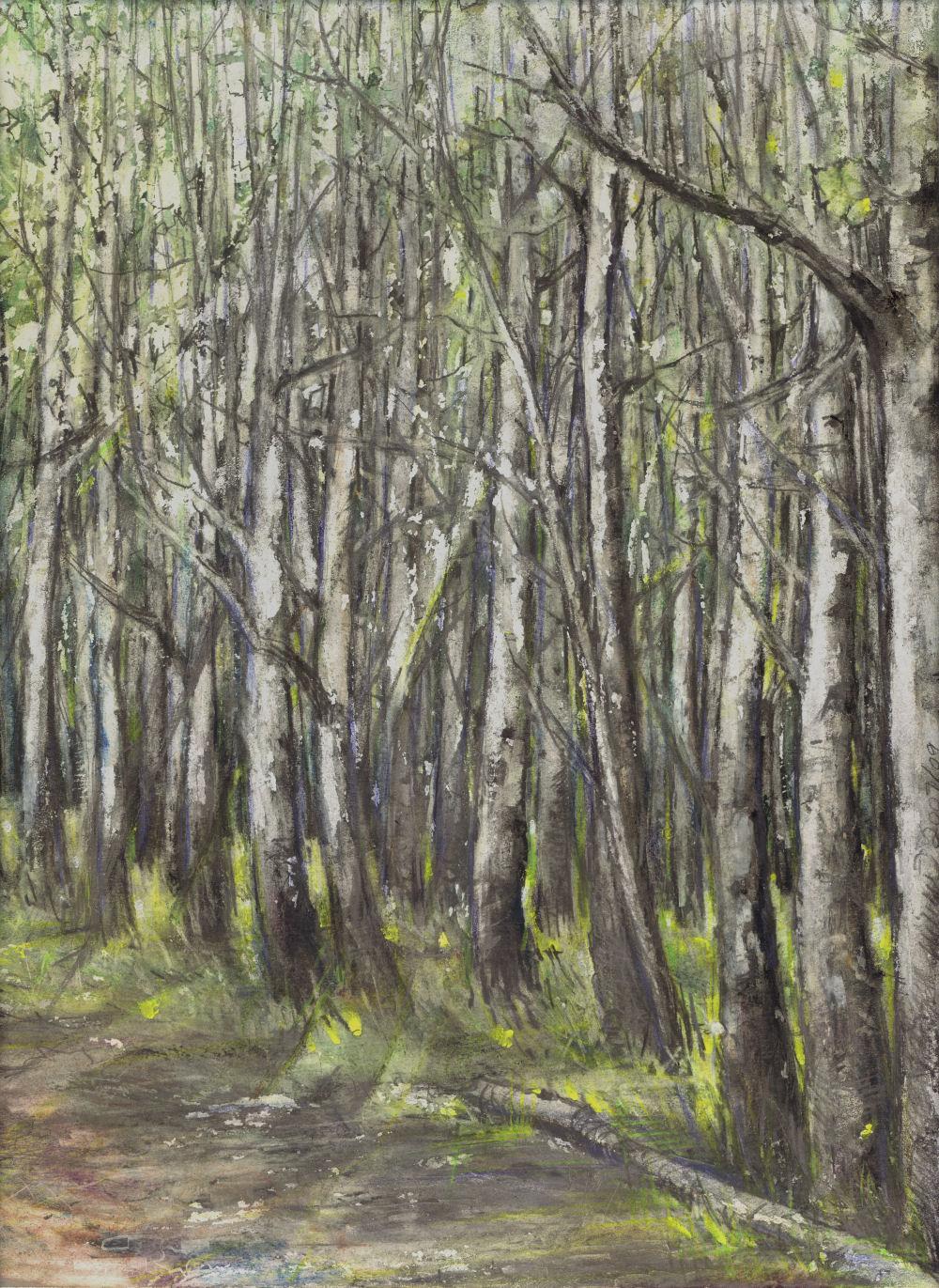 Northern Delights 01, Banff, Alberta, Canada, 14 x 11 graphite, waterwash graphite, oil stick, colored pencils