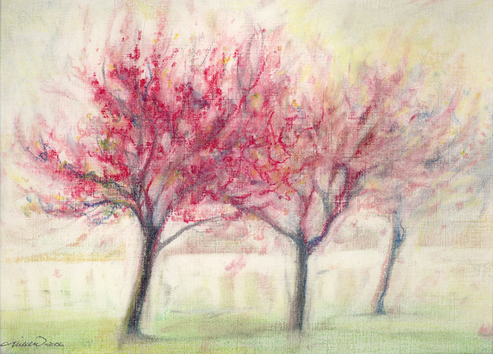 Eastern Redbuds, Coppell, Texas USA 14 x 11 inches soft pastels on paper