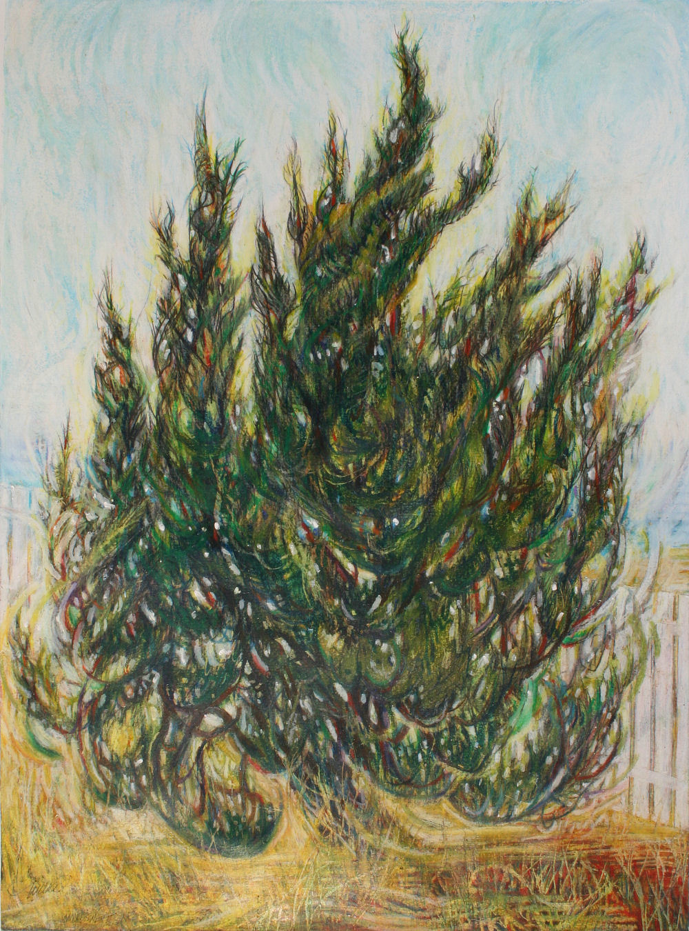Windswept Cypress in North Carolina, 24H x 18W inches oil pastels and colored pencils on paper