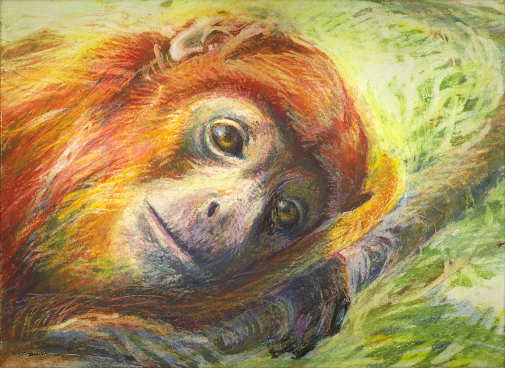 Young Howler Monkey 11H x 14W inches oil pastels on paper, white mat
