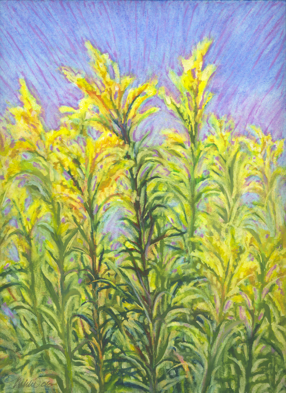 Goldenrod, late Summer in Southern Alberta,14 x 11 inches oil pastels on paper
