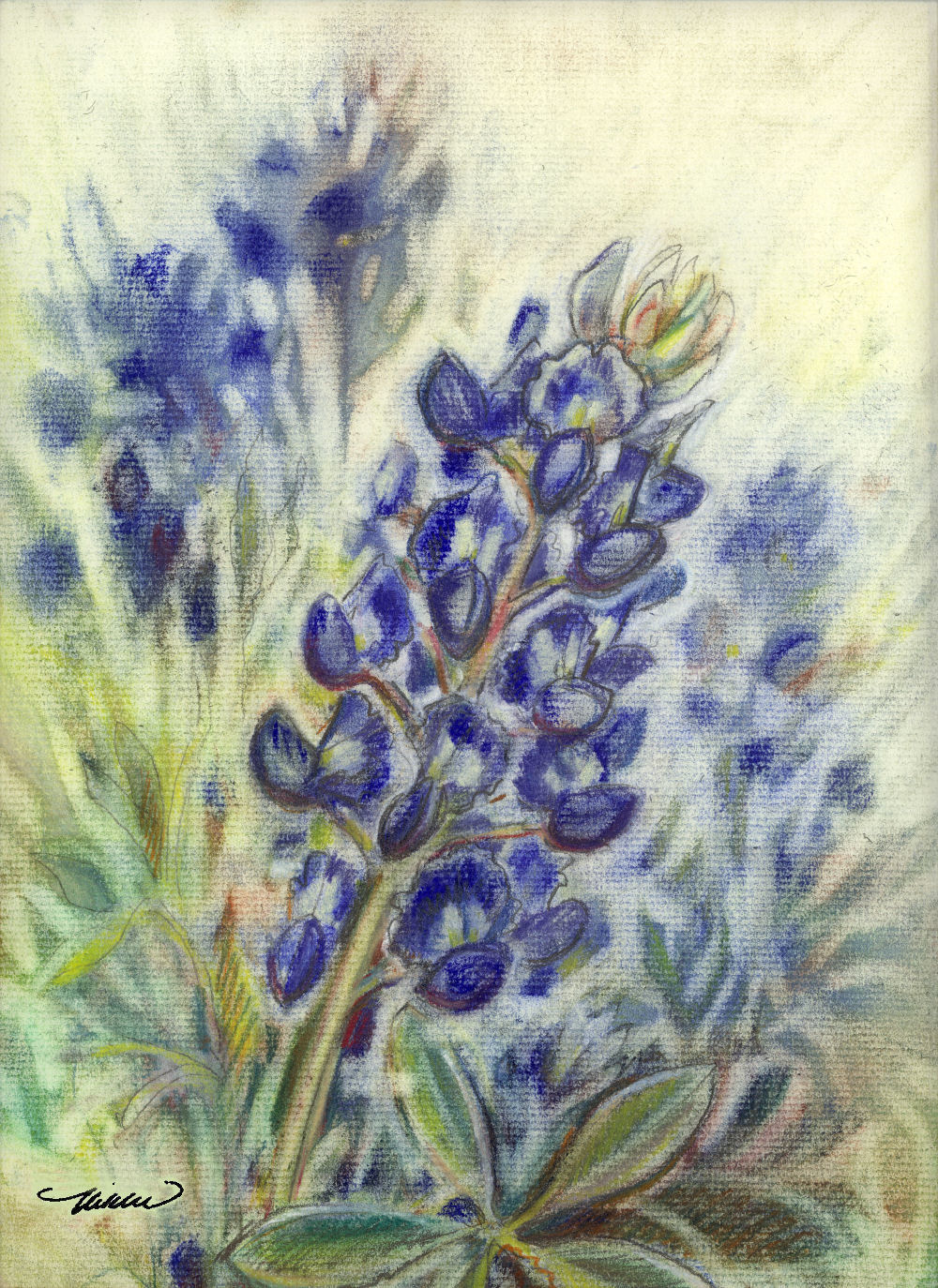 Texas Bluebonnets, 16H x 12W inches Dry Pastels on paper, wood frame with white crackle finish, 26H x 22W inches total