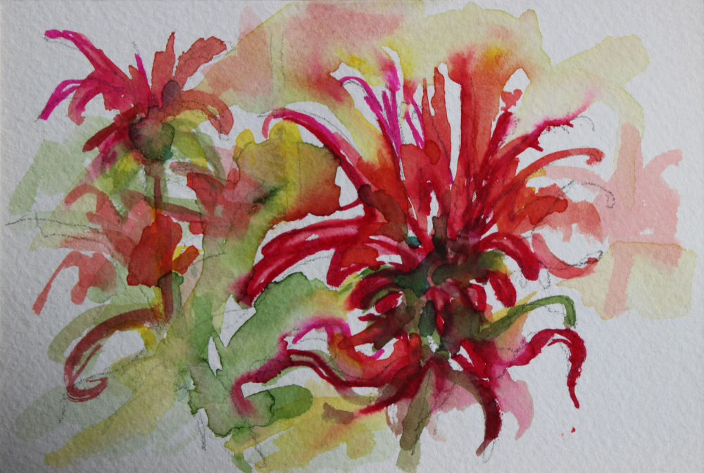 Bee Balm, 4 x 6 inch watercolor
