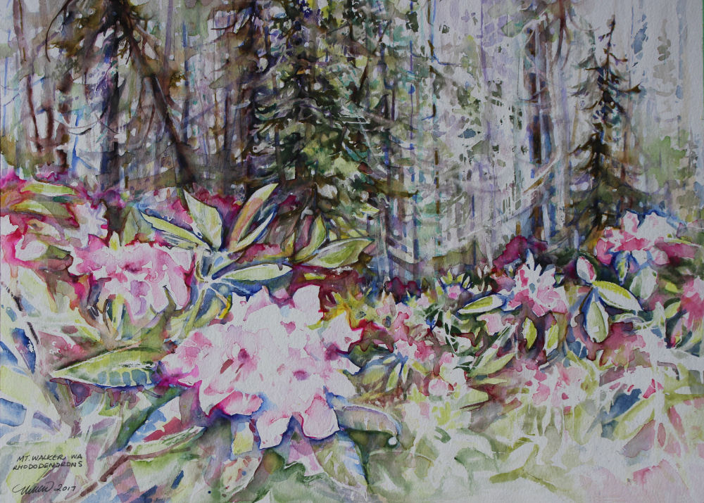 Mt. Walker, WA Rhododendrons, 22W x 15H inches WC on 140 lb cold pressed premium
