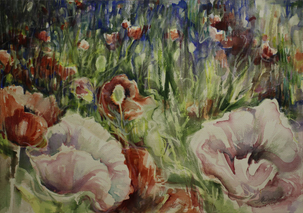 North Saanich Poppies, 16 x 20 inches W/C on 140 lb. cold pressed premium
