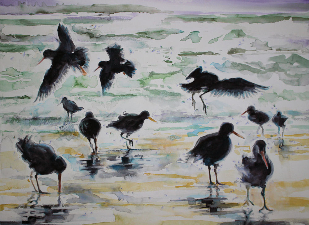 Oystercatchers, 18 x 24 inches watercolors on 140 lb cold press