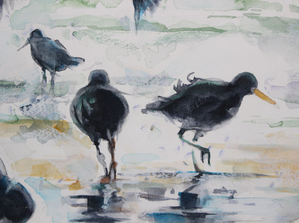 Oystercatchers, central detail