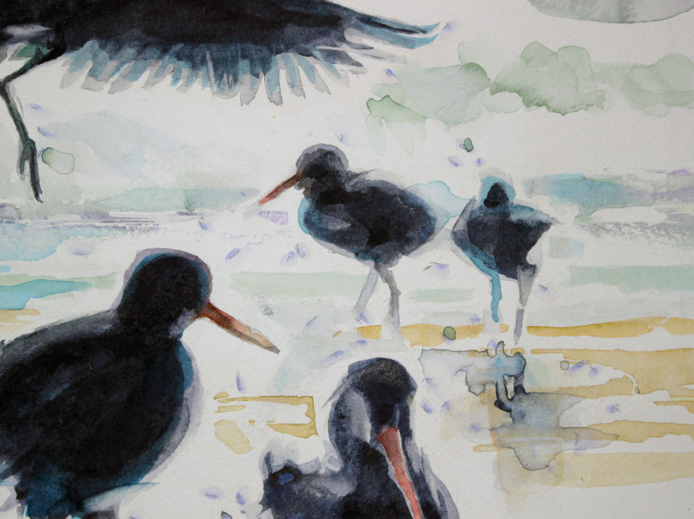 Oystercatchers, central right detail