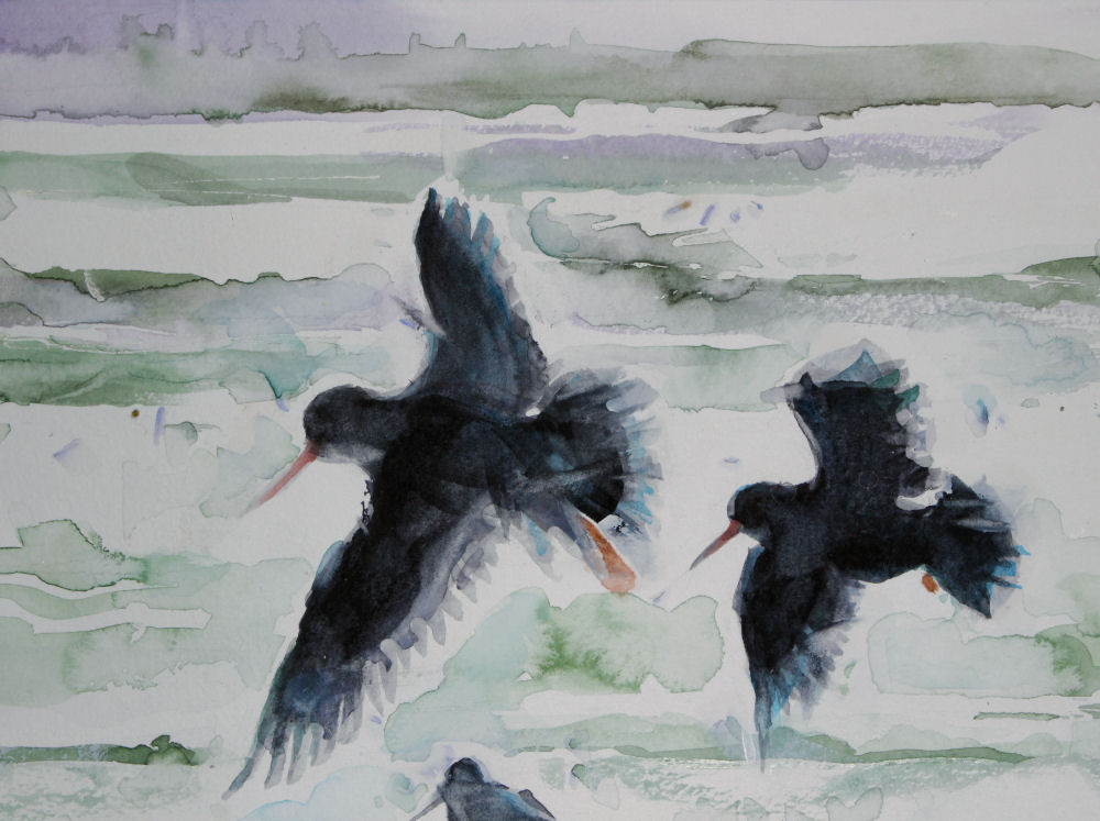Oystercatchers, upper left detail