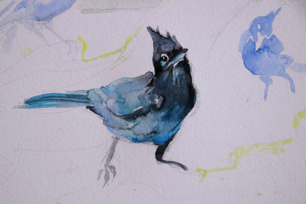 Stellar's Jays, work in progress detail