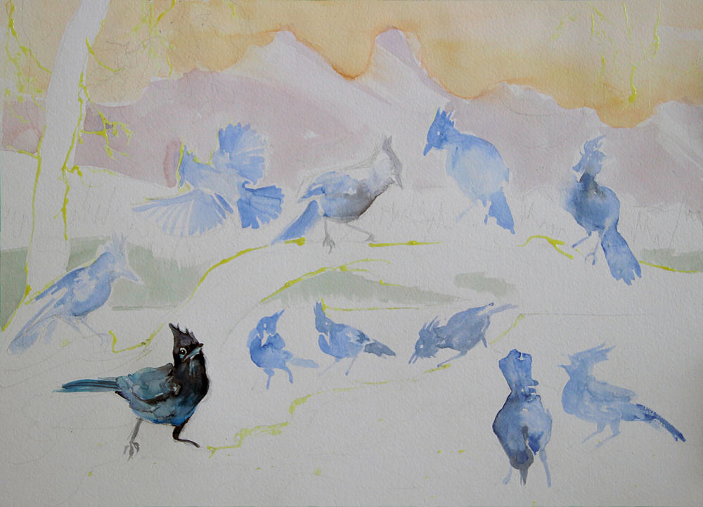 Stellar's Jays, work in progress, 18 x 24 inches watercolors on 140 lb. cold press