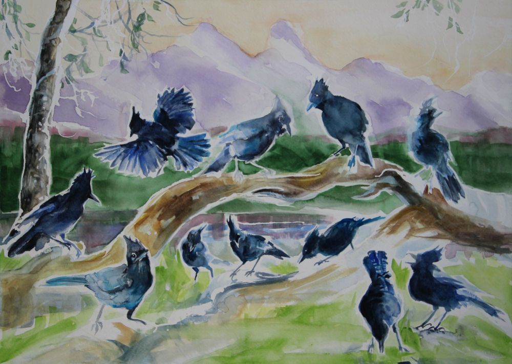 Stellar's Jays, phase 03 work in progress, 18 x 24 inches watercolors on 140 lb. cold press