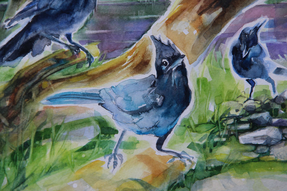 Stellars Jays, lower left detail