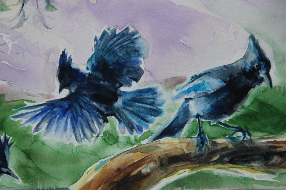 Stellars Jays, upper left detail