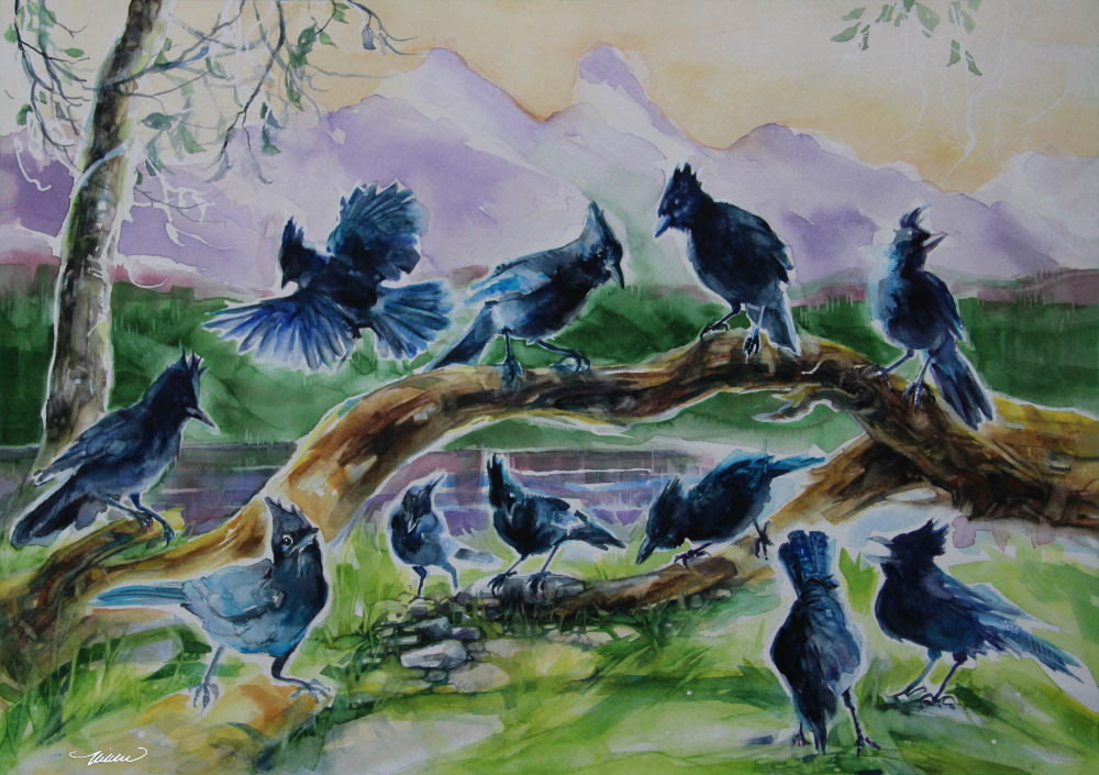 Stellar's Jays, work in progress - almost finished, 18 x 24 inches watercolors on 140 lb. cold press