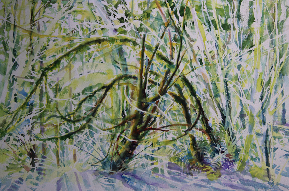 Tualatin Hills Nature Park, work in progress. 14H x 20W inches watercolors on 140 lb cold pressed